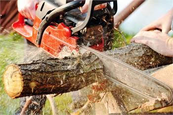 Tree Service Round Rock